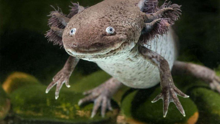 Животные с другой планеты: пять существ «из другого мира»