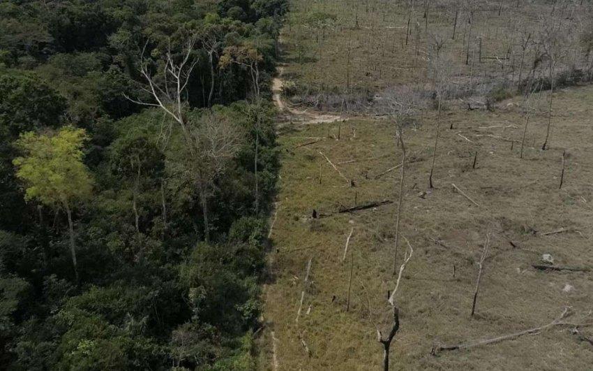 Спрос на мясо ведет к вырубке лесов в Бразилии. Изменения в соевой промышленности могут остановить это