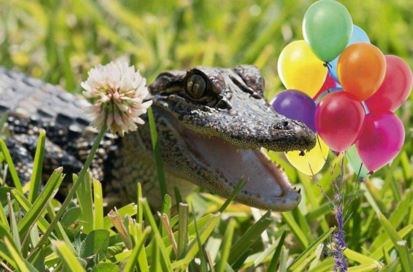 Гелиевый аллигатор и другие важные открытия: кто получил в этом году Шнобелевскую премию?