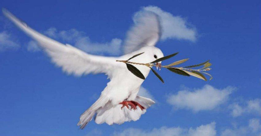 Почтовые голуби служили Цезарю и Наполеону. Почему американские военные рассматривают возможность их повторного введения?