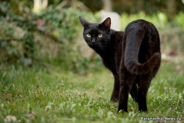 Легенда о призрачном коте - предвестнике несчастий, живущем в подземельях Капитолия США - Паранормальные новости