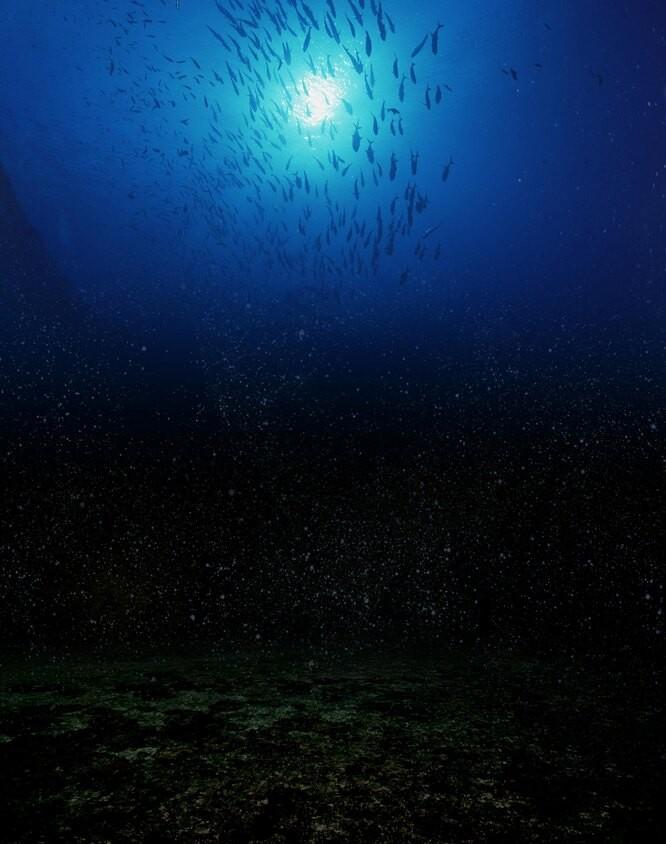 Загадки природы: Биолюминесценция