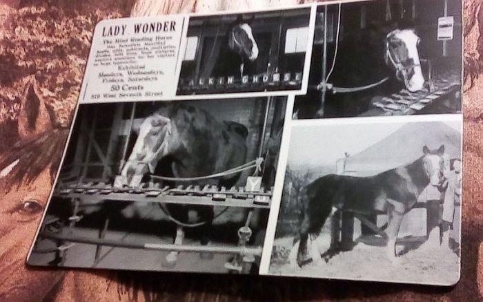 Причудливая история Леди - Великой лошади-экстрасенса - Паранормальные новости