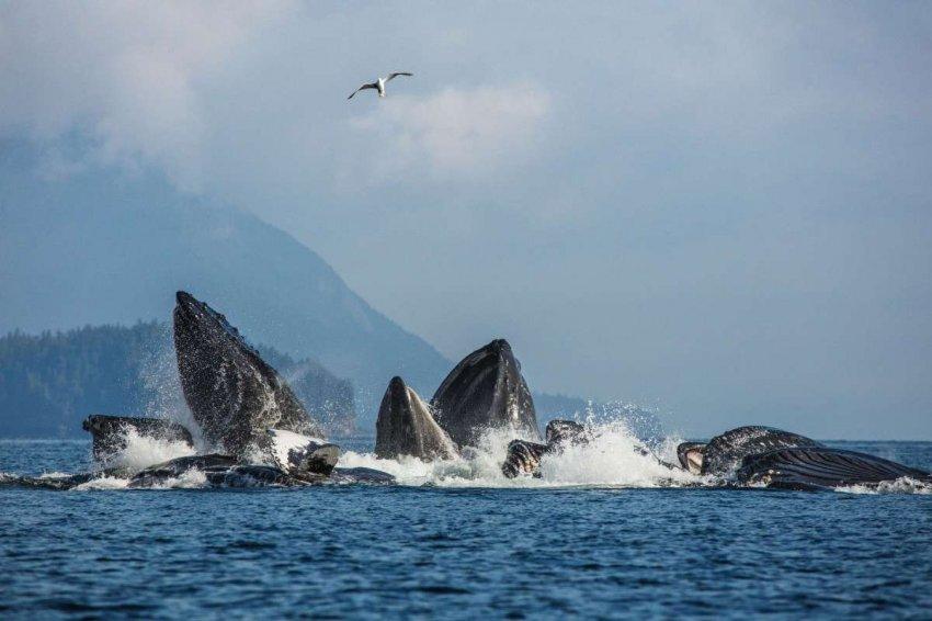 Обнадеживающее возвращение полярных китов