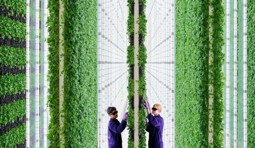 Вертикальные фермы с искусственным интеллектом обещают революцию в сельском хозяйстве