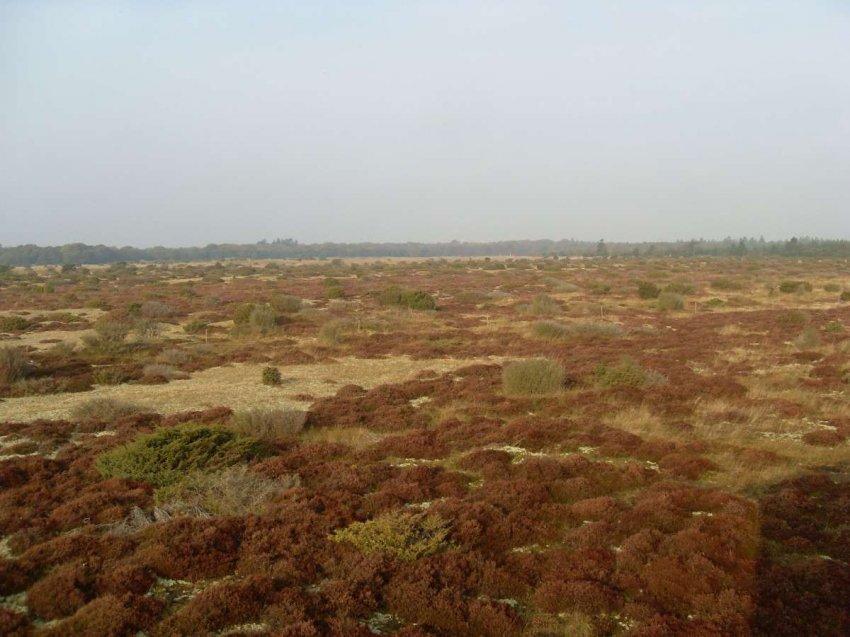 Торфяные болота: их восстановление может замедлить изменение климата и возродить забытый мир