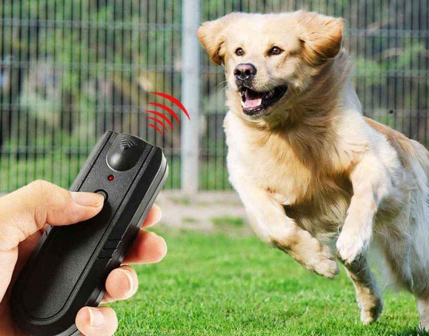 ТОП-10 самых эффективных отпугивателей собак