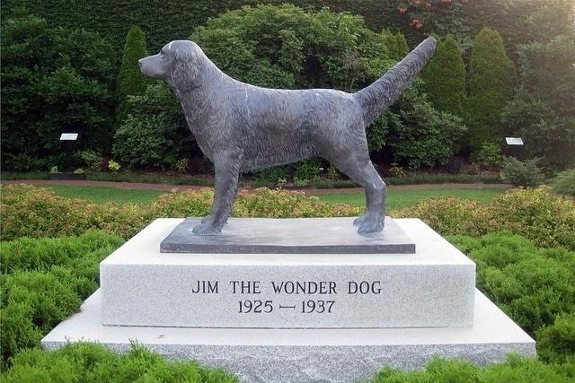 Супер-пес Джим, который понимал человеческую речь и читал мысли - Паранормальные новости