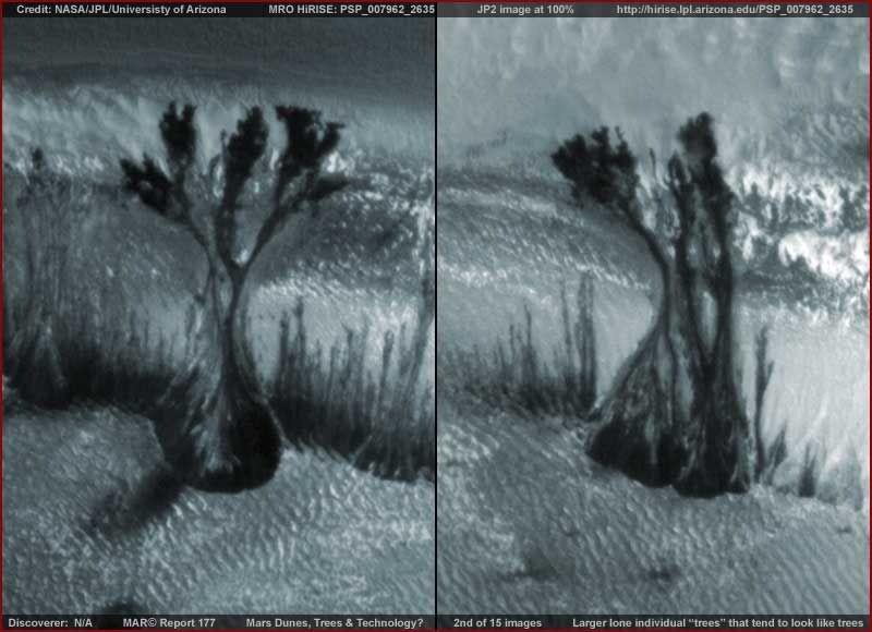 Загадка марсианских деревьев - Паранормальные новости