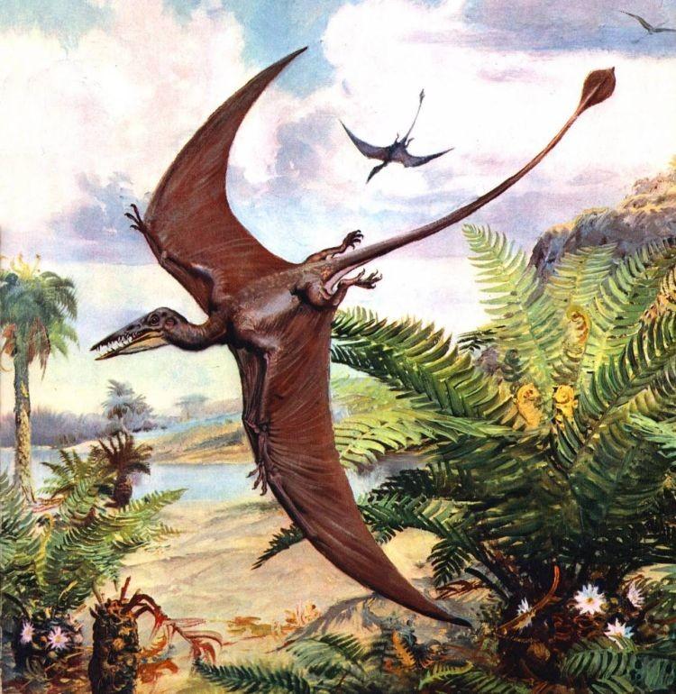 Вымершие летающие ящеры в современной Новой Гвинее - Паранормальные новости