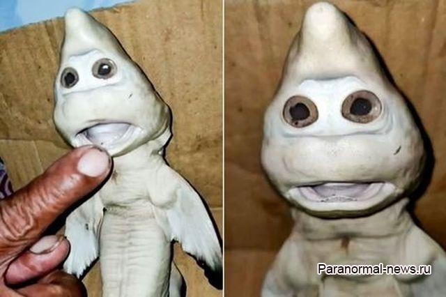 Из-за редкой мутации акуленок стал похож на мультяшного призрака - Паранормальные новости