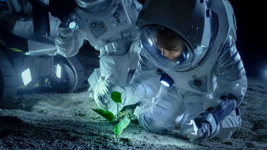 Завтрак на Марсе: почему производство продуктов питания на Красной планете будет проблемой?