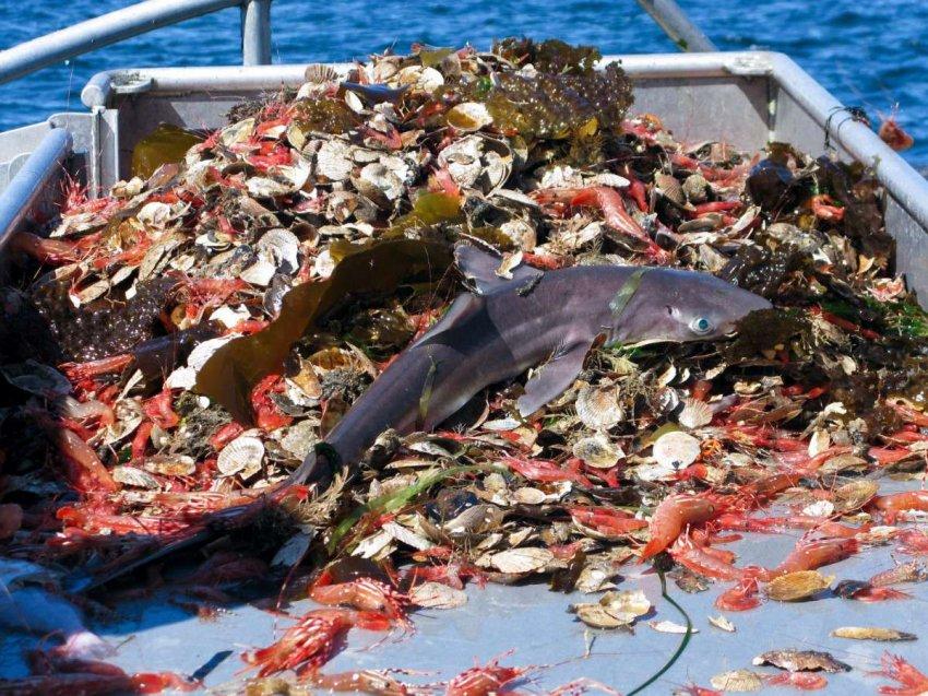 Пустые океаны: когда наступит время последней рыбы на тарелке?