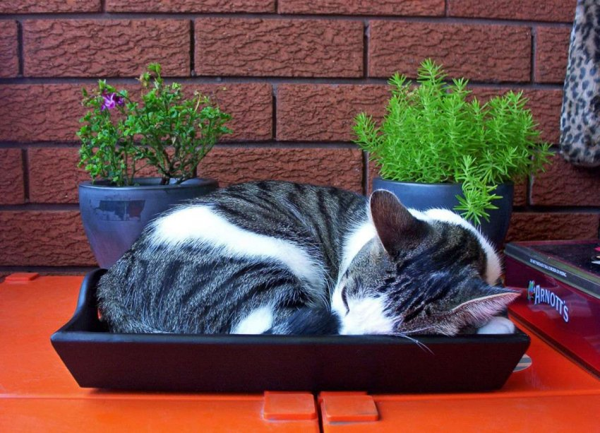 ТОП-10 популярных лотков для кошек