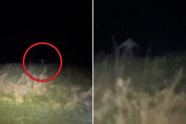 На видео засняли тощего монстра, выскакивающего из травы (+ видео) - Паранормальные новости