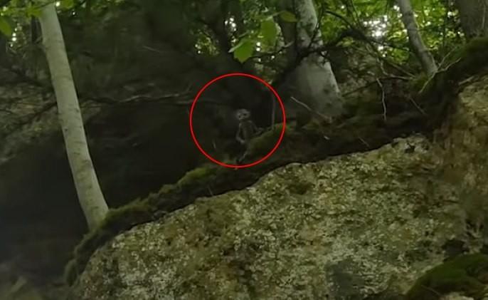 «Охотник на фей» заснял в лесу крошечных зеленых человечков - Паранормальные новости