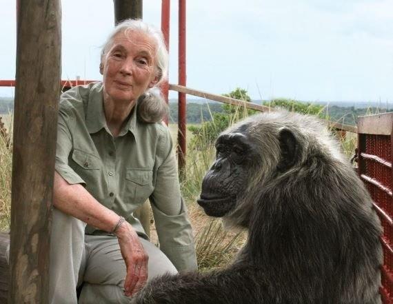 Жуткая история о Гражданской войне шимпанзе - Паранормальные новости