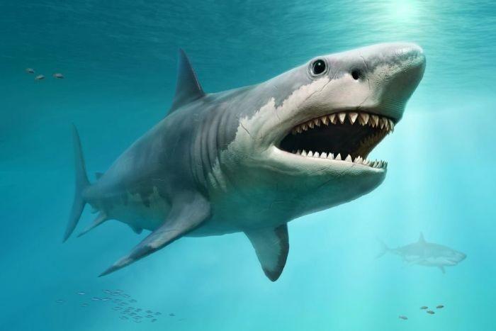 Выяснилось, что древняя акула мегалодон была куда крупнее, чем считалось раньше - Паранормальные новости