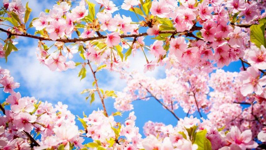 Календарь официальных выходных: как отдыхаем на майские праздники в 2021 году
