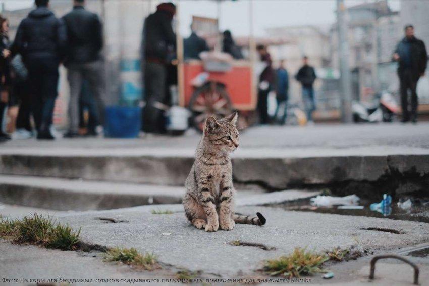 На корм для бездомных котиков скидываются пользователи приложения для знакомств Mamba
