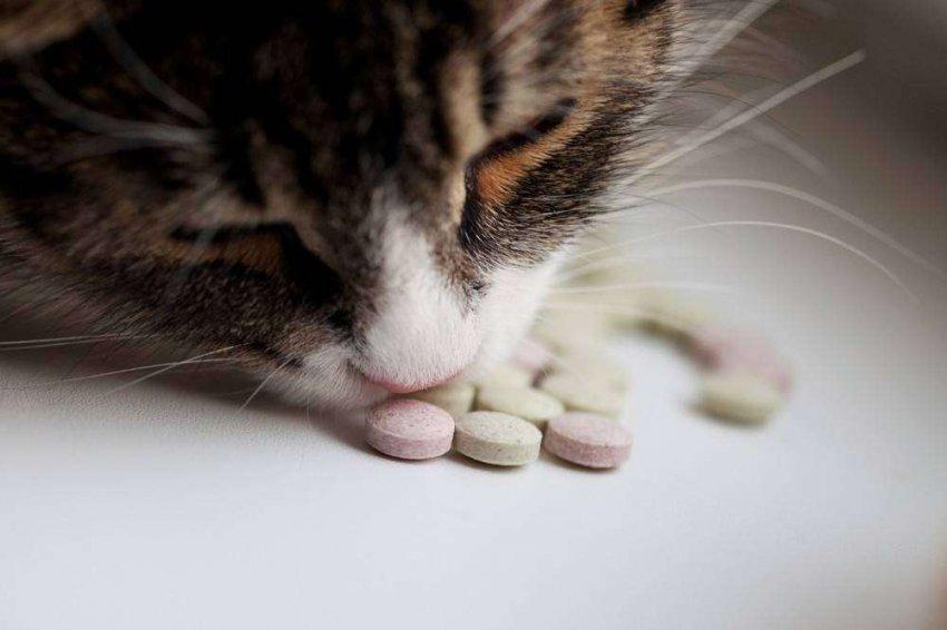 ТОП-10 лучших предложений витаминов и добавок для котов и кошек на 2021 год
