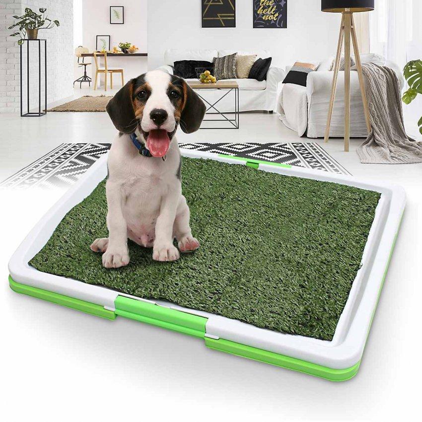 Рейтинг домашних лотков для собак: ТОП-10