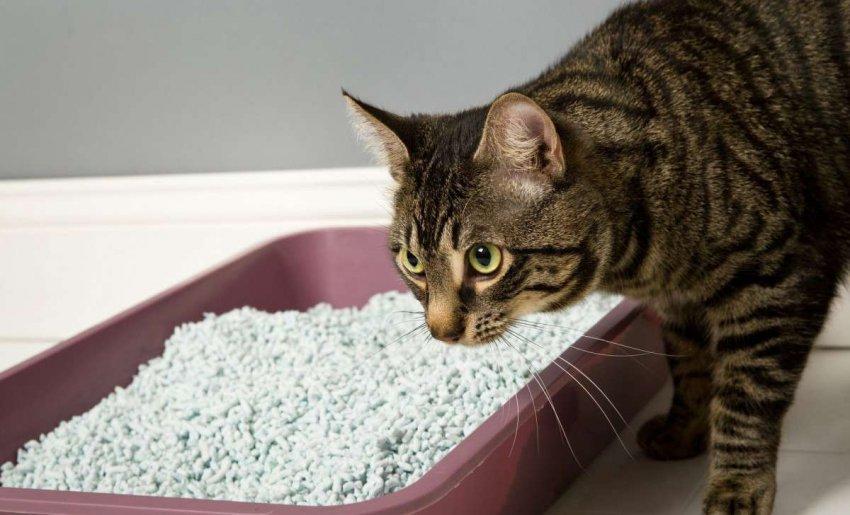 ТОП-10 лучших предложений наполнителей для кошачьего туалета