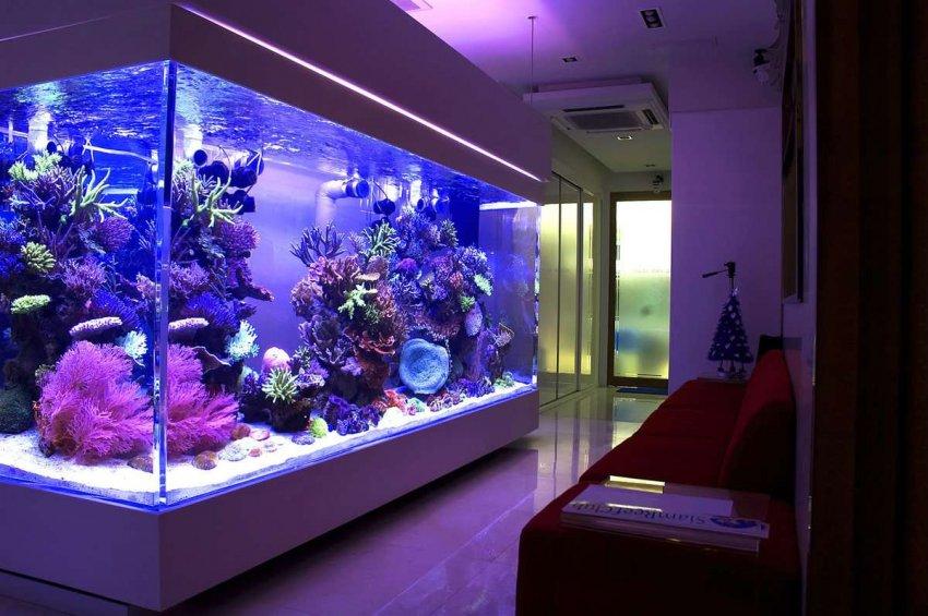 ТОП-10 популярных предложений аквариумов
