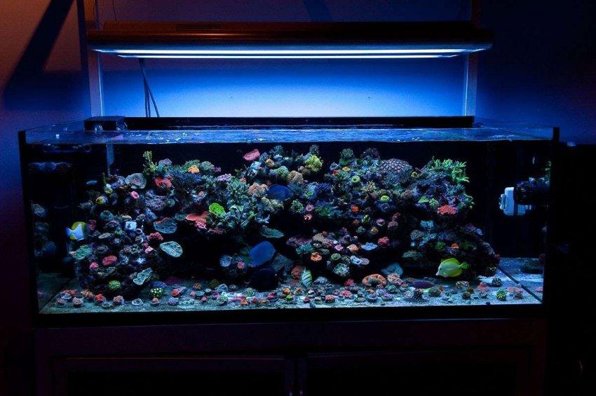 Обзор лучших предложений фильтров для аквариумов: ТОП-10