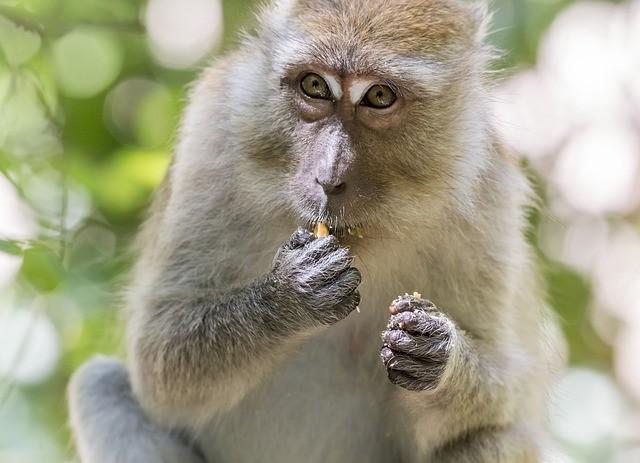 Созданы первые гибридные эмбрионы человека и обезьяны - Паранормальные новости