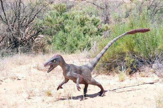 Динозавр на заднем дворе: На камеру наблюдения попало существо, похожее на велоцираптора - Паранормальные новости