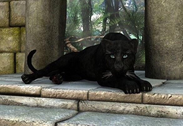 В Чешире люди стали все чаще видеть огромных черных кошек - Паранормальные новости