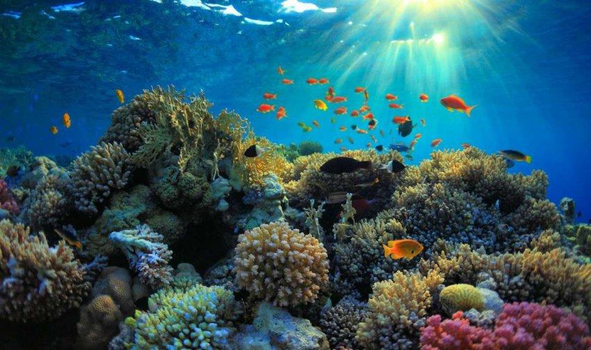 Острова Феникс: крупнейший охраняемый морской заповедник в мире