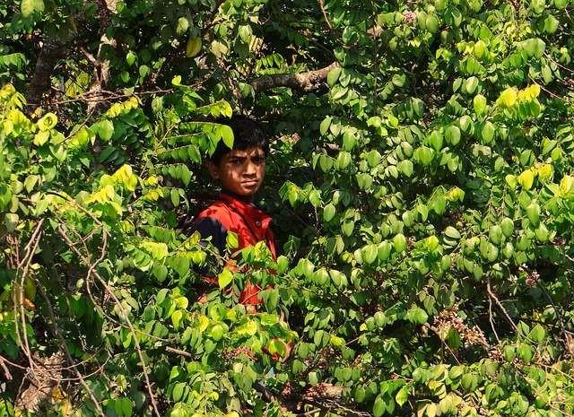Существо-подражатель человеческому голосу в индийских джунглях - Паранормальные новости