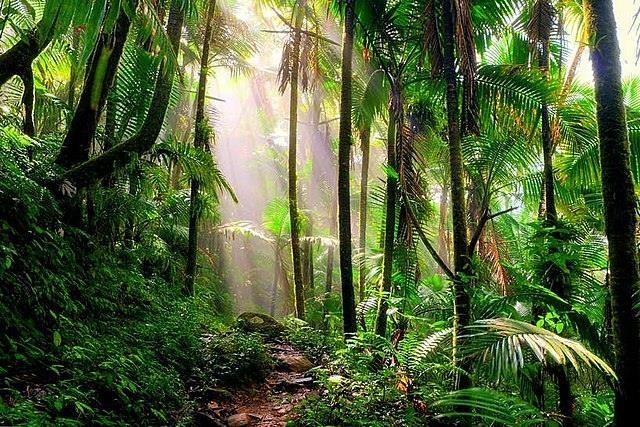 Встречи с инопланетянами в лесу Пуэрто-Рико - Паранормальные новости