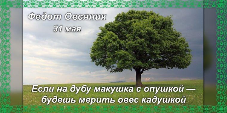 Народные приметы и праздники 31 мая, в день Федота Овсяника