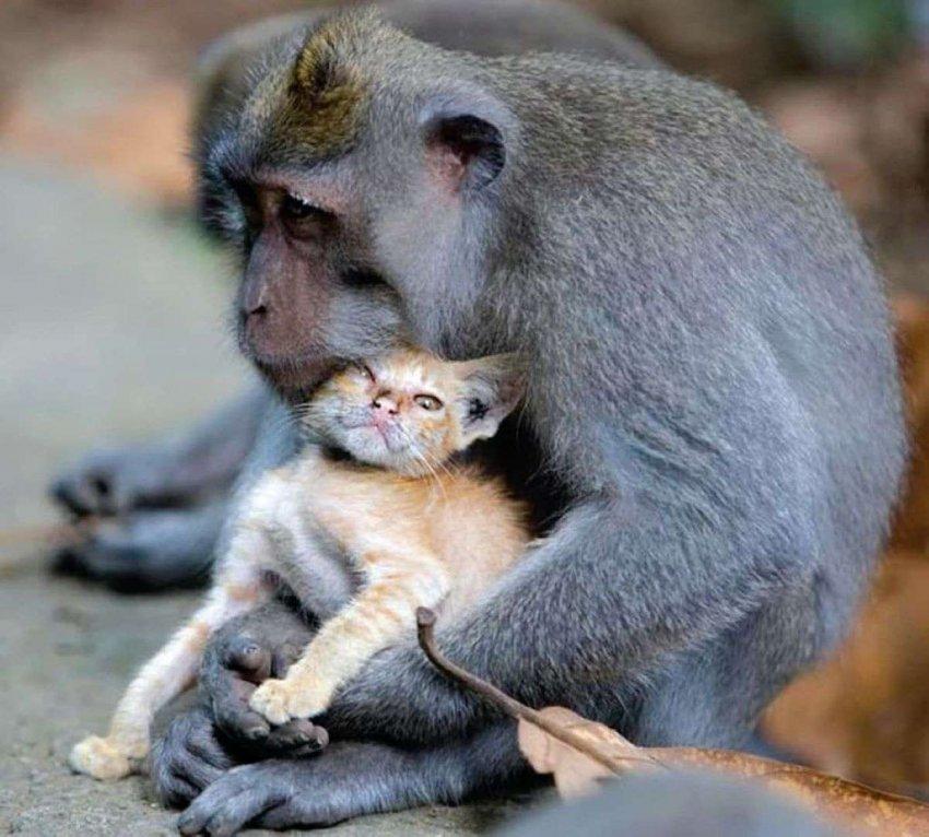 «Усыновление» среди животных не имеет эволюционного смысла, так почему же это происходит?