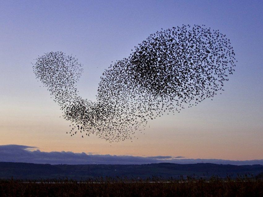 Коллективный разум: может ли планета мыслить?