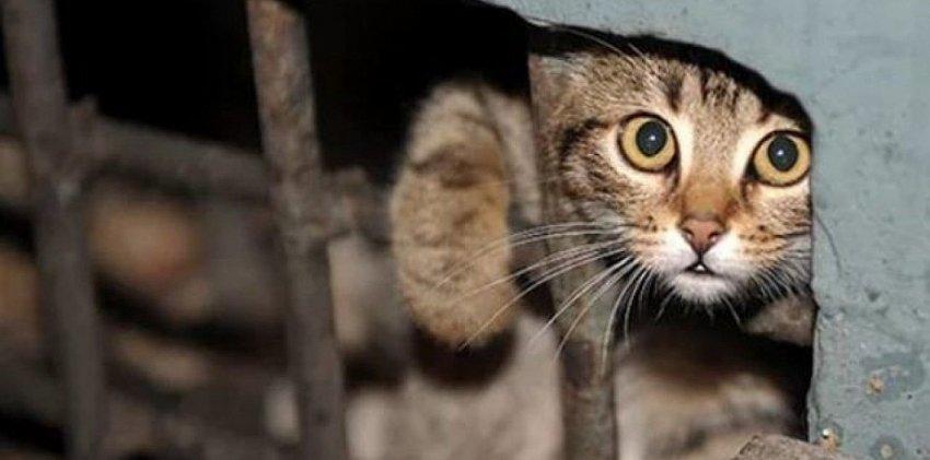 «Единая Россия» предложила ввести штрафы за выброшенных домашних животных