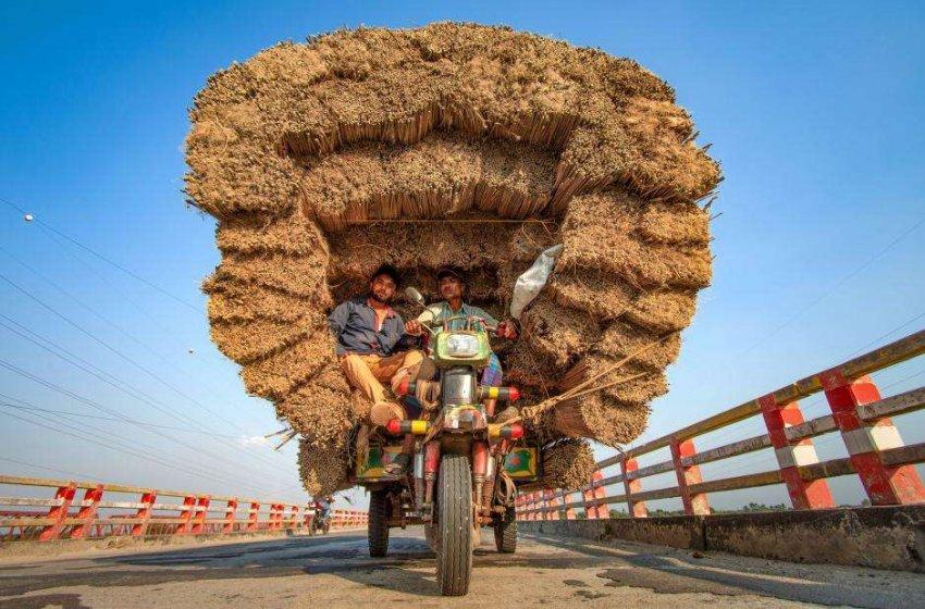 Бесстрашные курьеры: оригинальные транспортные процедуры азиатских фермеров