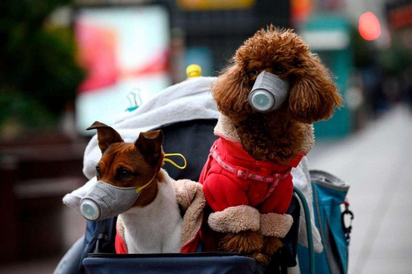 У человека выявили собачий коронавирус. Нужно ли волноваться?