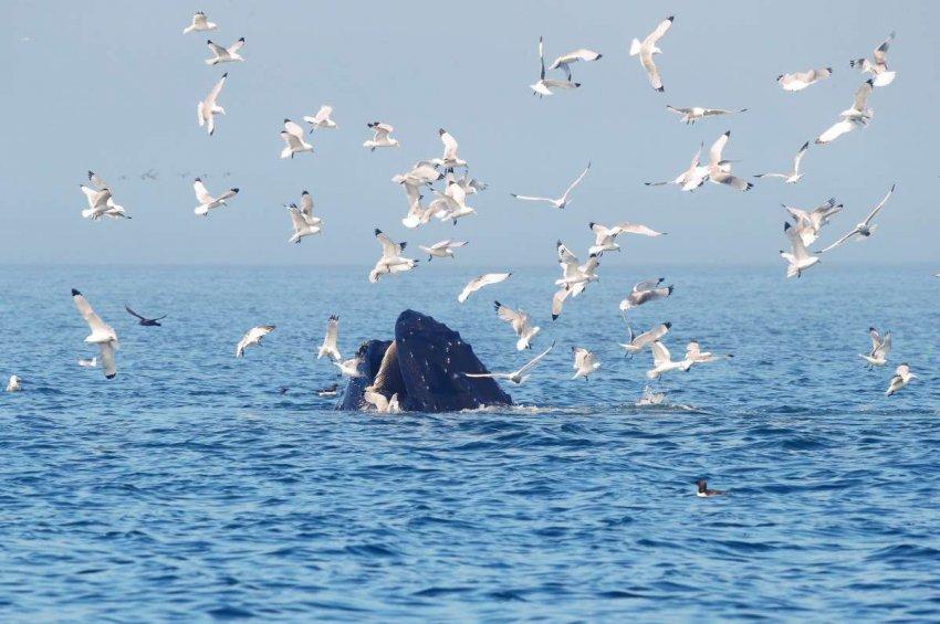 Морские птицы – сегодняшние канарейки в угольной шахте, и они отправляют нам срочное сообщение