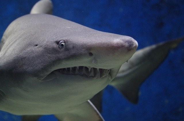 Кто истребил почти всех акул 19 млн лет назад? Ученые не знают ответа