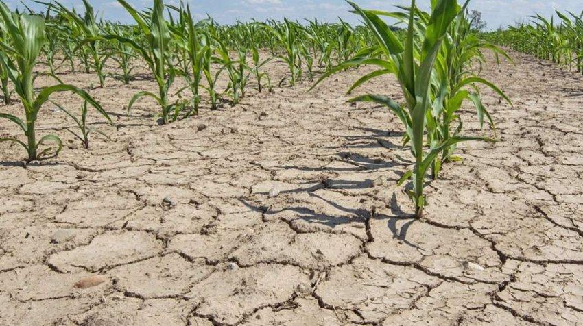 Каждая третья смерть от жары с 1991 года связана с изменением климата. Как еще потепление влияет на наше здоровье