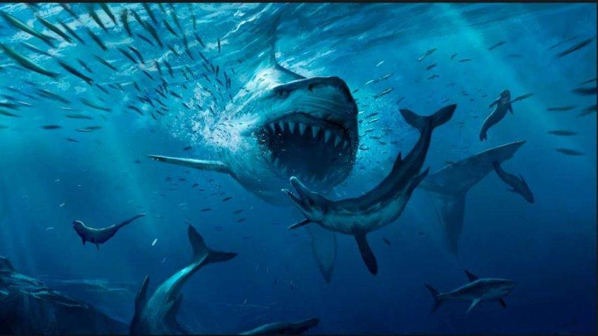 Акулы почти вымерли 19 миллионов лет назад и не оправились от этого по сей день