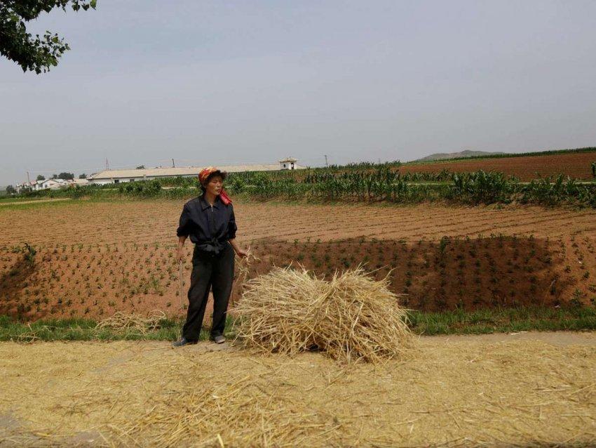 Северная Корея: COVID-19 может привести к массовому голоду