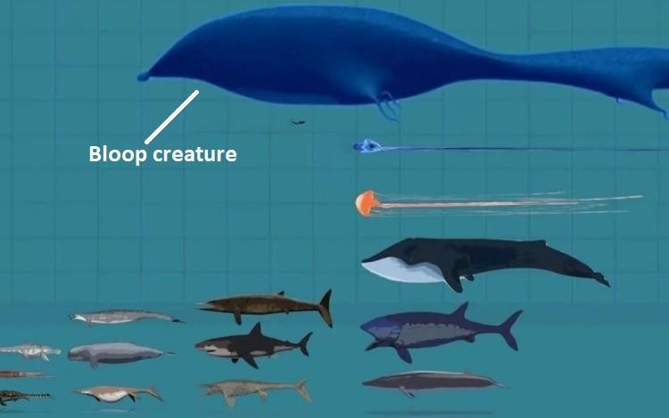 Загадка глубоководного звука «Блуп»: Гигантское морское чудовище или айсберг?