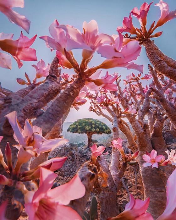 Сокотра: уникальный остров с неземной природой