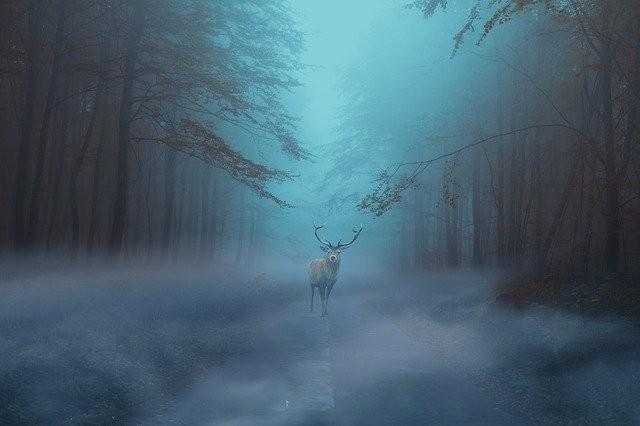 Странный олень напугал туристов