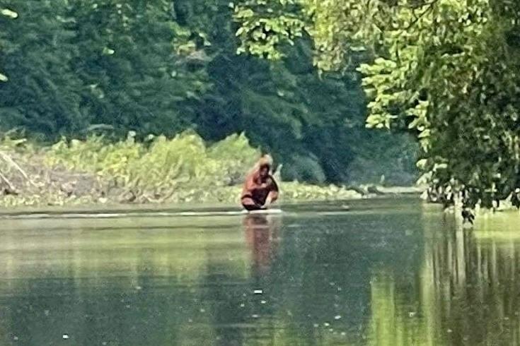 Йети, переносящий детеныша через реку, был снят жителем Мичигана на видео